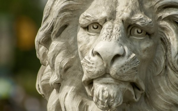 Man Made Statue Lion Close-Up HD Wallpaper   Background Image