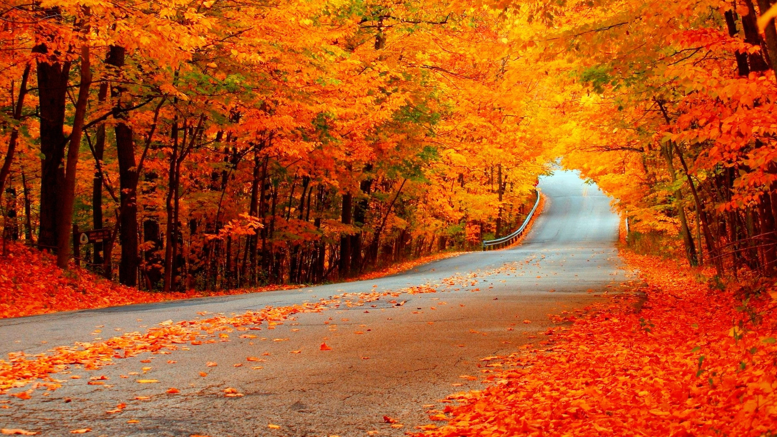 Forest computer wallpapers desktop backgrounds 1920x1200 id - Autumn Road With Orange Trees Full Hd Wallpaper And