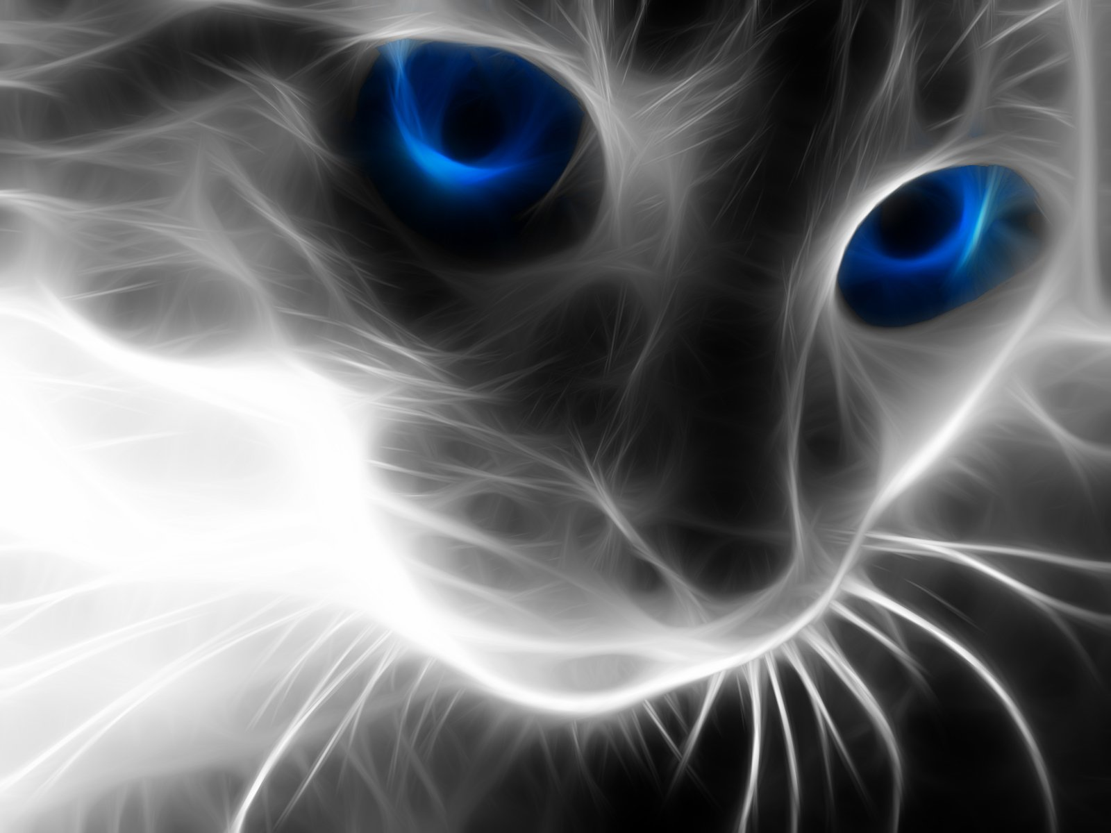 Animal - Cat  Animal Wallpaper