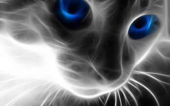 Tier - Katze Wallpapers and Backgrounds ID : 67800