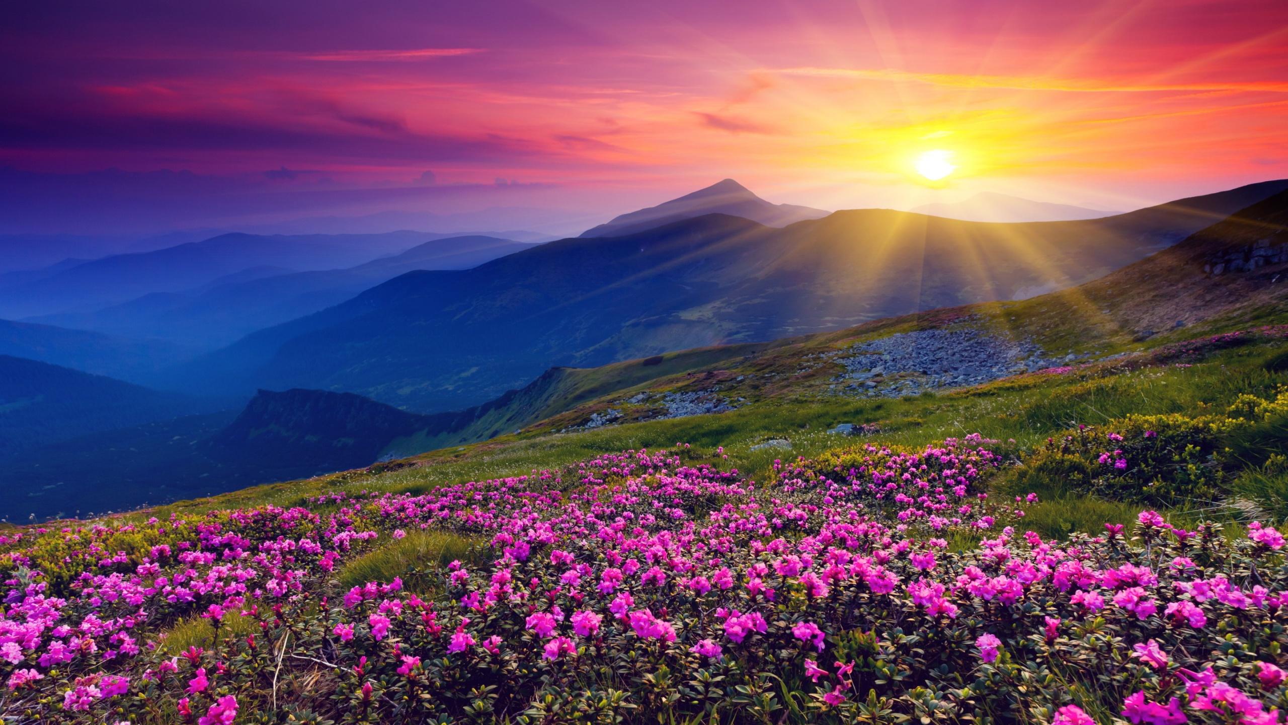 Amazing Wallpaper Mountain Flower - 680092  Collection_988176.jpg