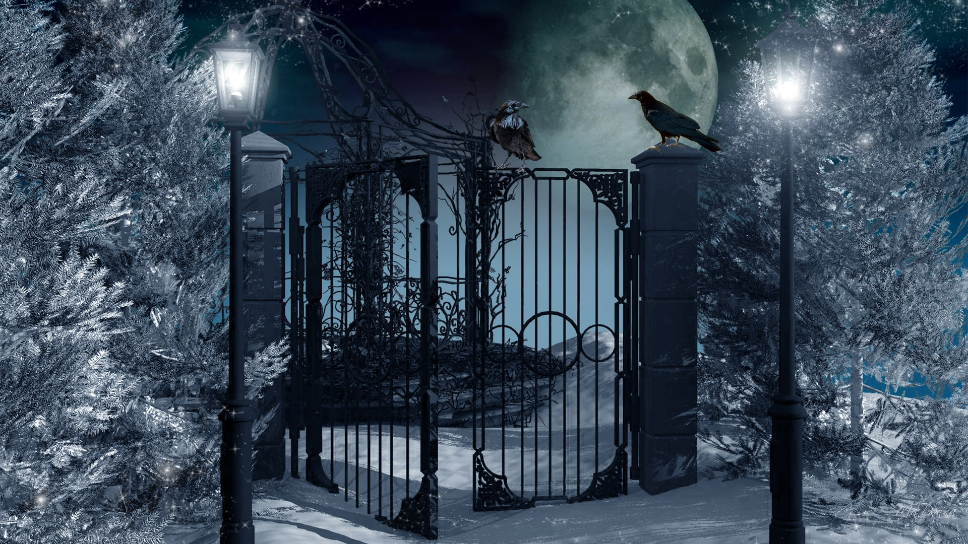 full moon on winter night full hd wallpaper and