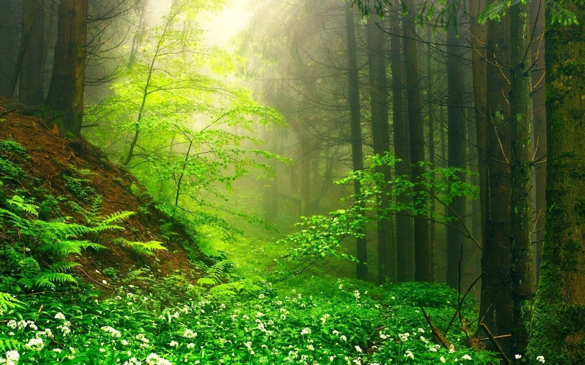 misty forest in springtime hd wallpaper hintergrund
