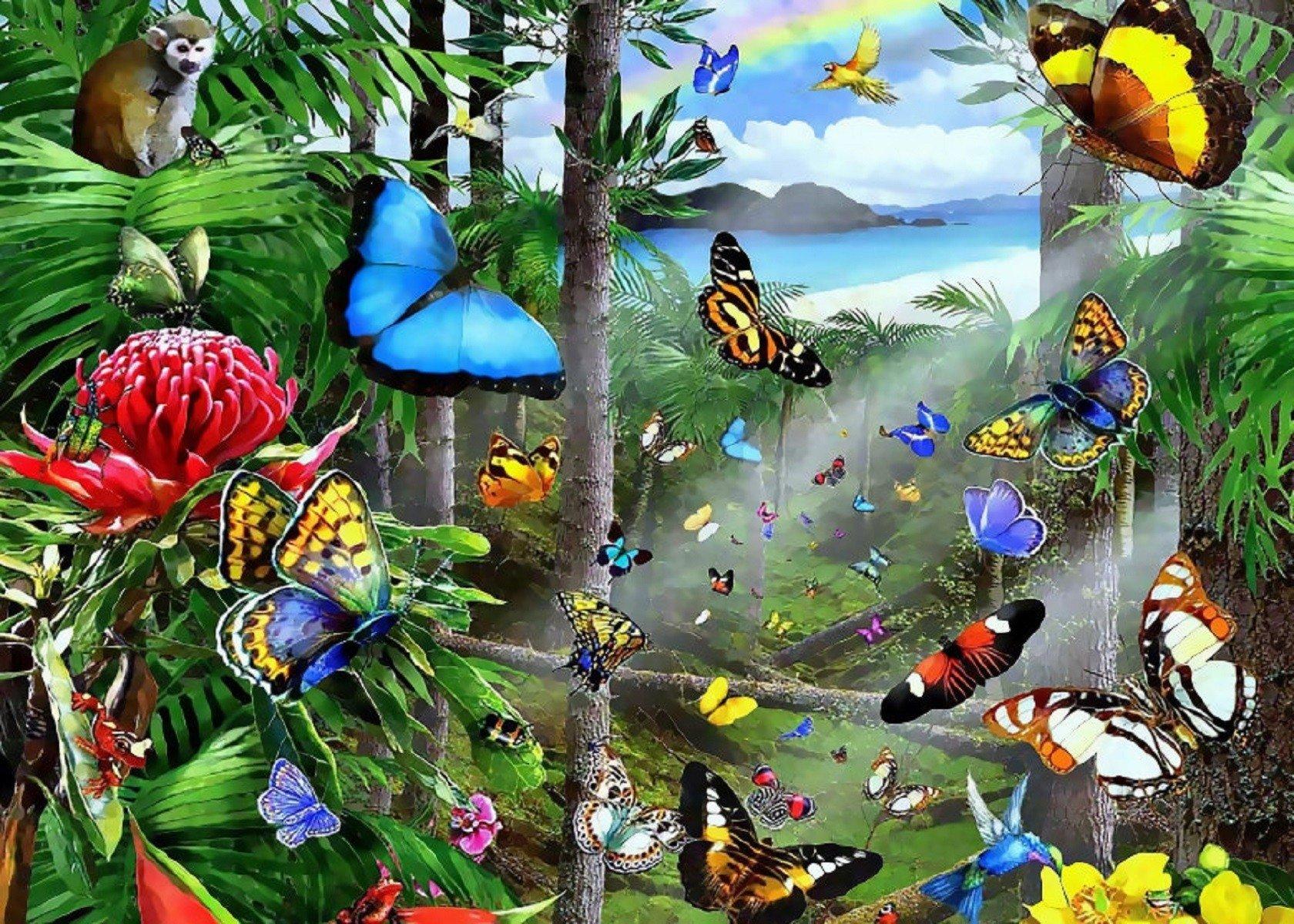 rainforest butterfly wallpaper - photo #1