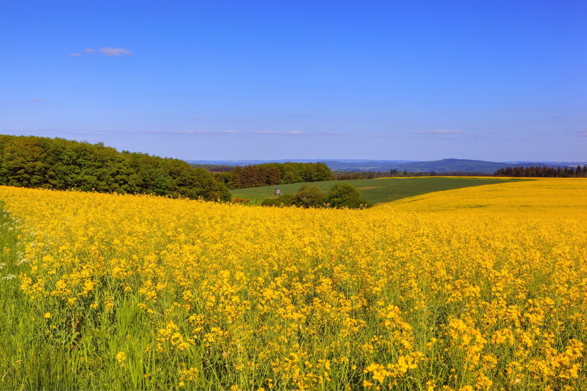 Earth - Field  Flower Landscape Horizon Nature Yellow Flower Wallpaper
