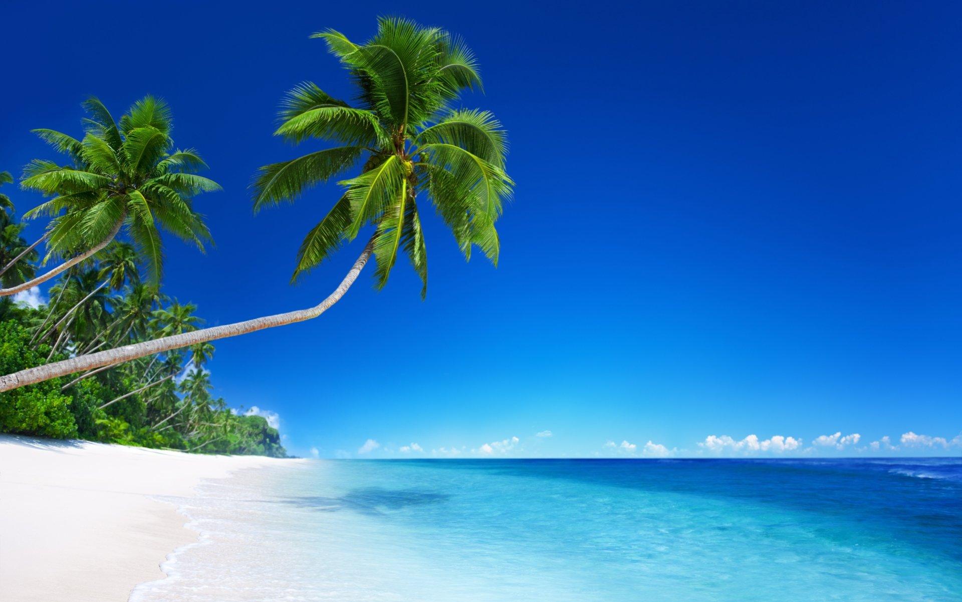 Tropics Palm Trees Sun Beach 4k Hd Desktop Wallpaper For: Palm Trees On Tropical Beach 4k Ultra HD Wallpaper