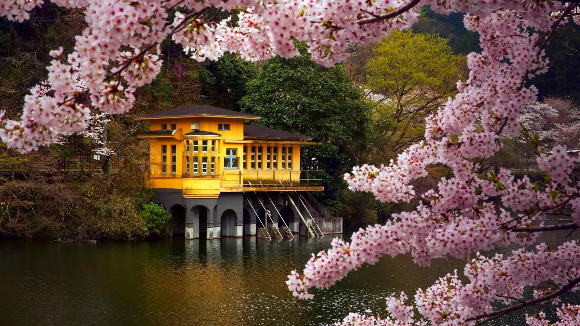 Japanese Street In Springtime Hd Wallpaper Background Image