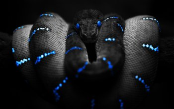 Animal - Snake Wallpapers and Backgrounds ID : 69110