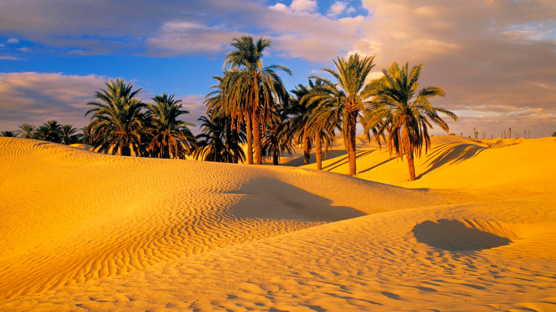 palm trees in the desert fond d 39 cran hd arri re plan 1920x1080 id 692907 wallpaper abyss. Black Bedroom Furniture Sets. Home Design Ideas