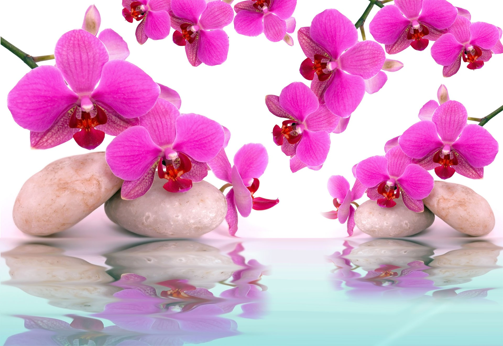 Wallpaper Orchidee Steine