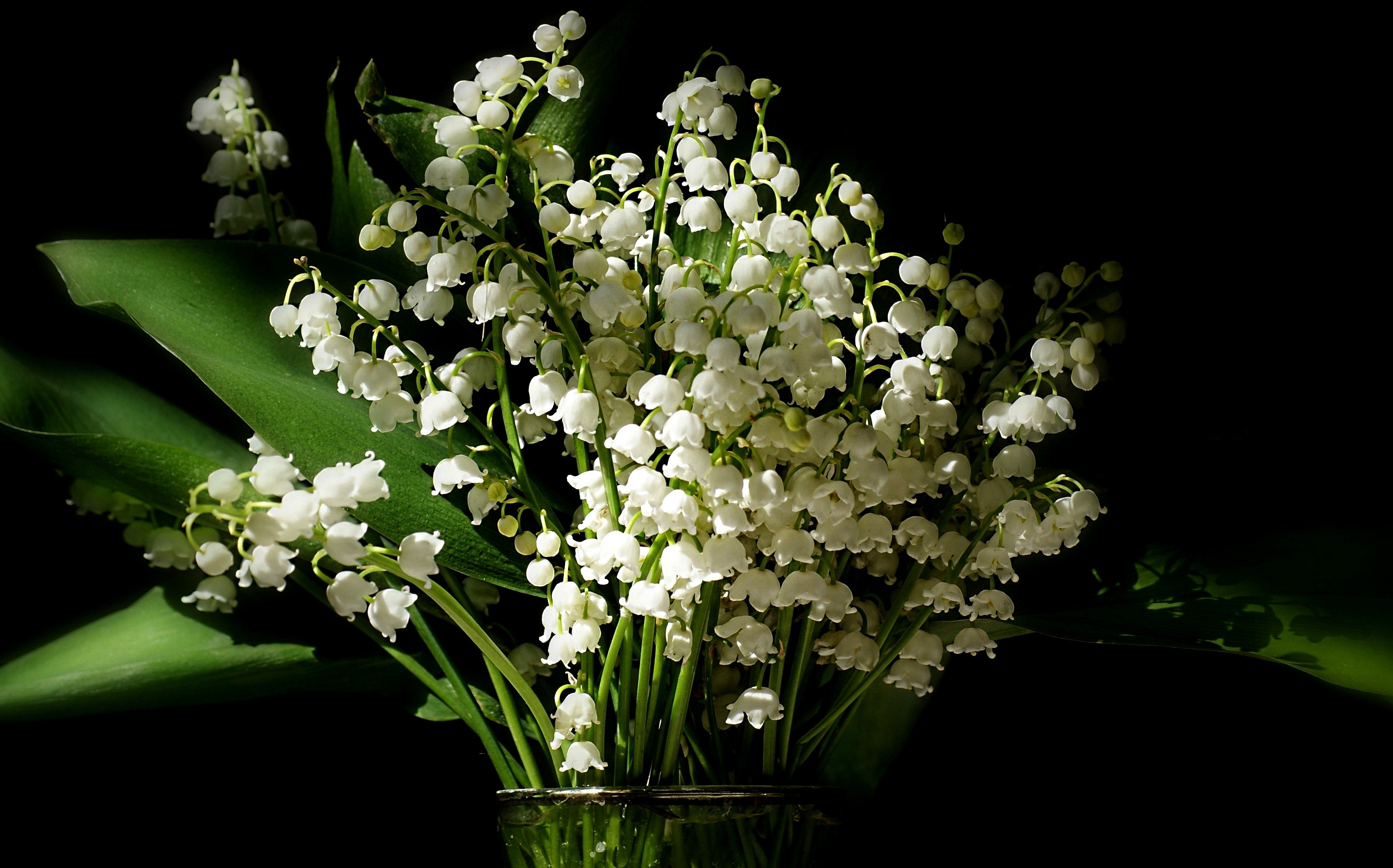14 Lily Of The Valley Hd Wallpapers Background Images