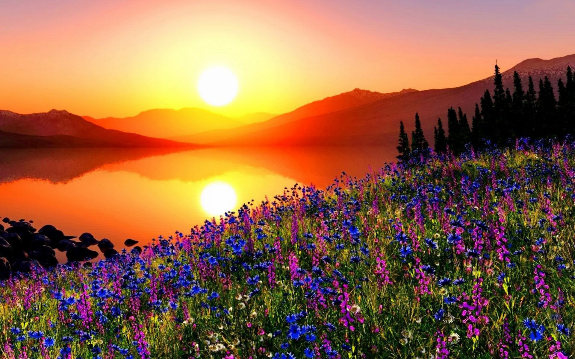 Mountain Flowers at Sunset