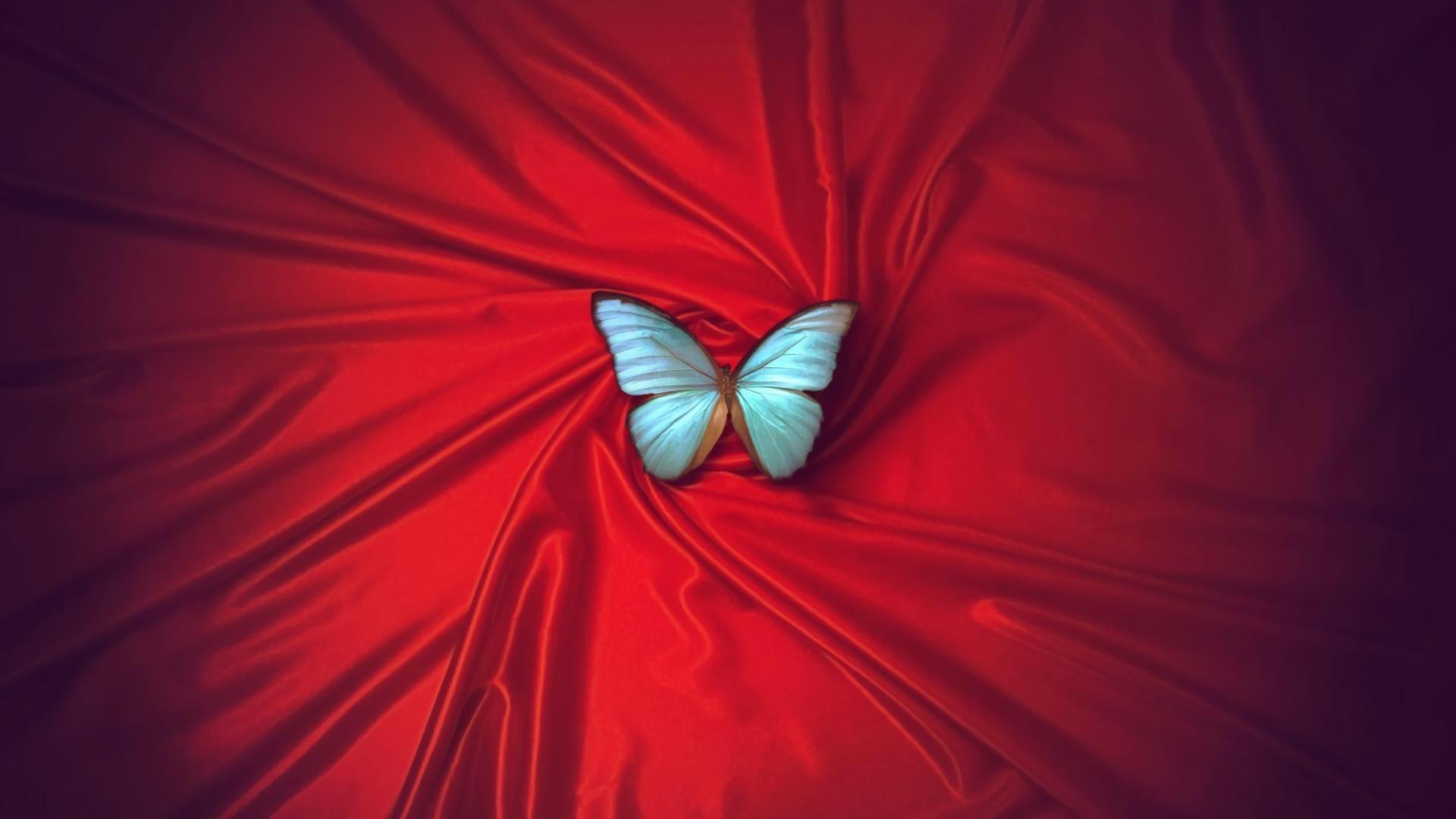 Light Blue Butterfly HD Wallpaper   Background Image ...