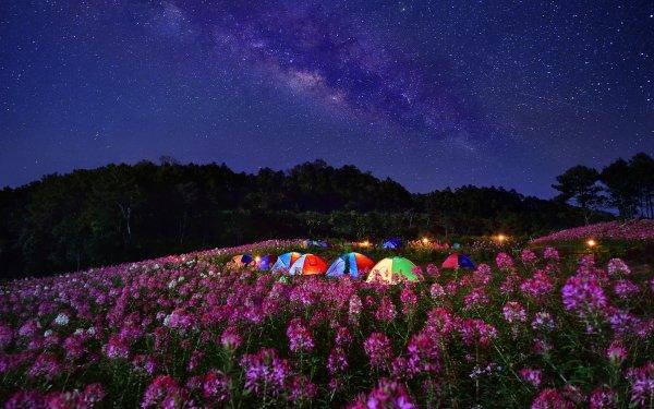 Fotografía Camping Flor Cielo Vía Láctea Starry Sky Estrellas Noche Tent Fondo de pantalla HD | Fondo de Escritorio