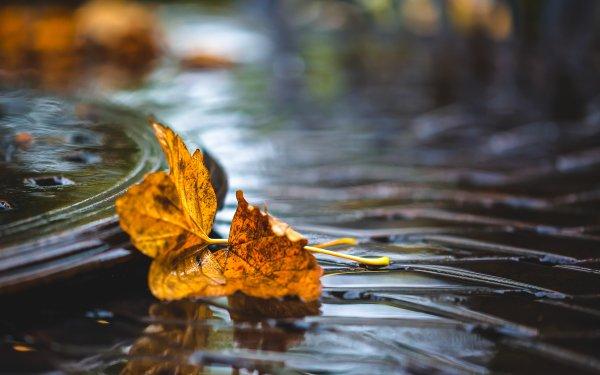 Earth Leaf Water Bokeh HD Wallpaper   Background Image