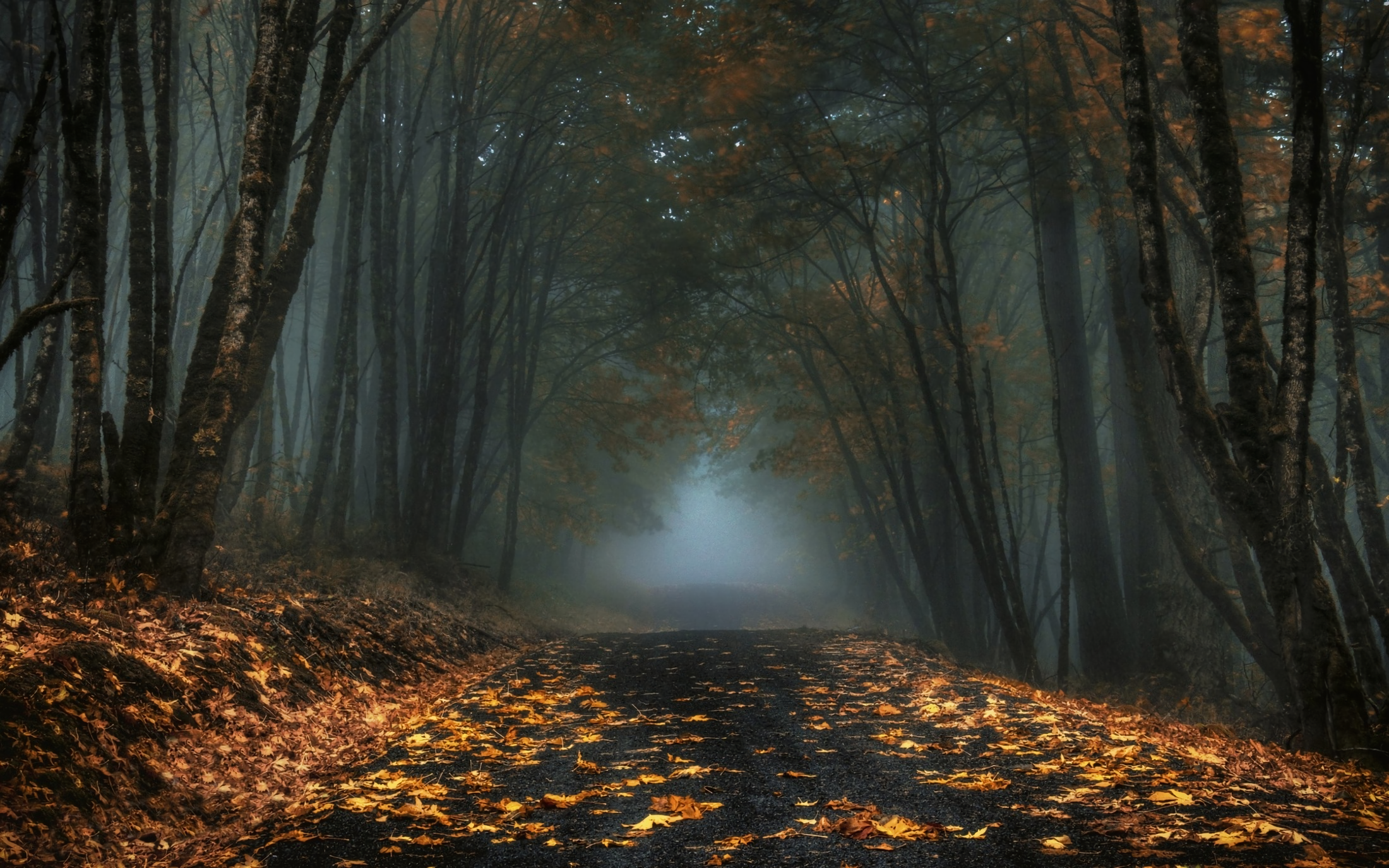 Foggy Autumn Forest Road HD Wallpaper