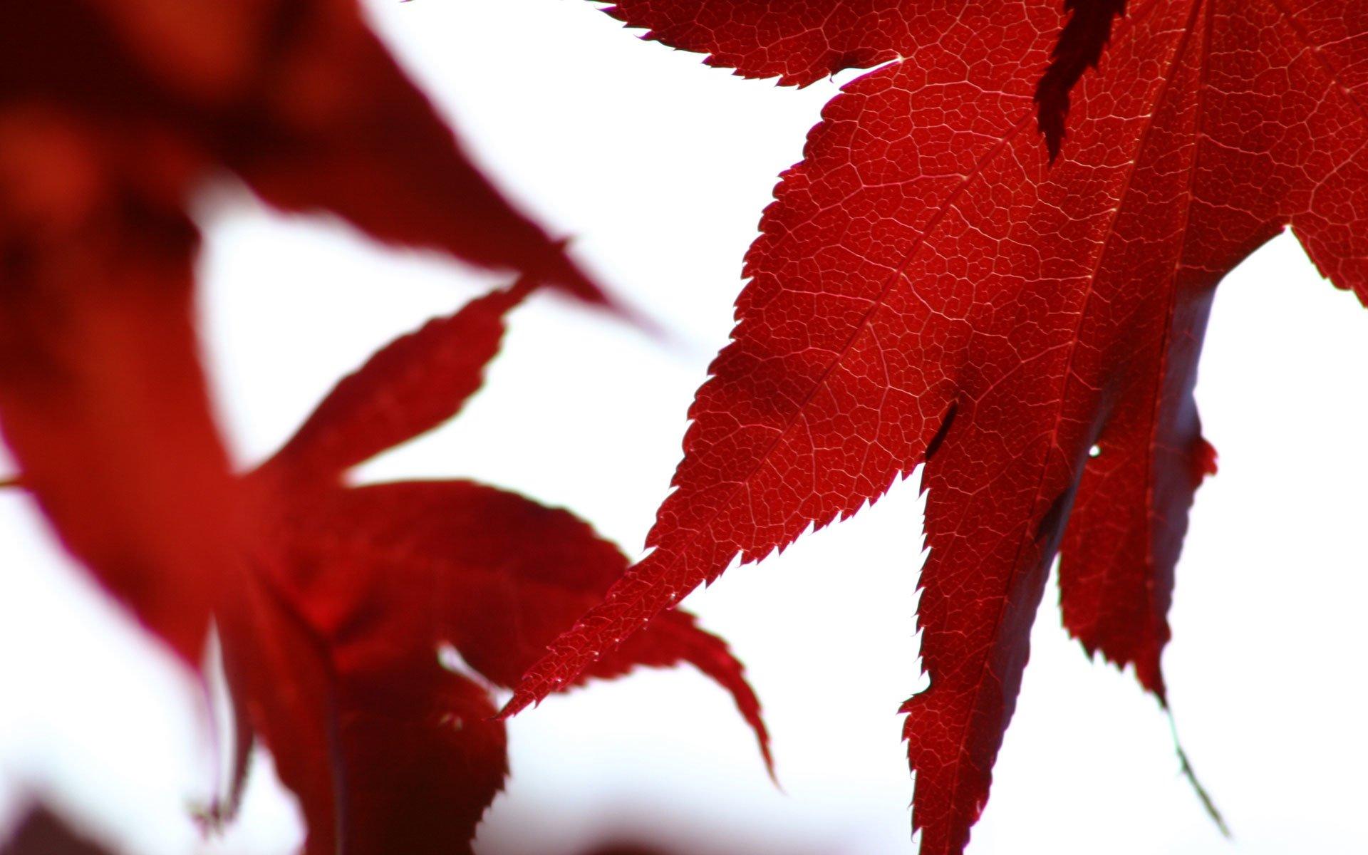 Earth - Leaf  Fall Wallpaper