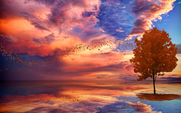 Artistic Sky Tree Colors Cloud Bird Ocean HD Wallpaper   Background Image
