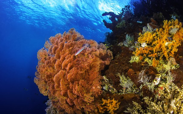 Earth Underwater Coral Reef Colors Fish HD Wallpaper   Background Image