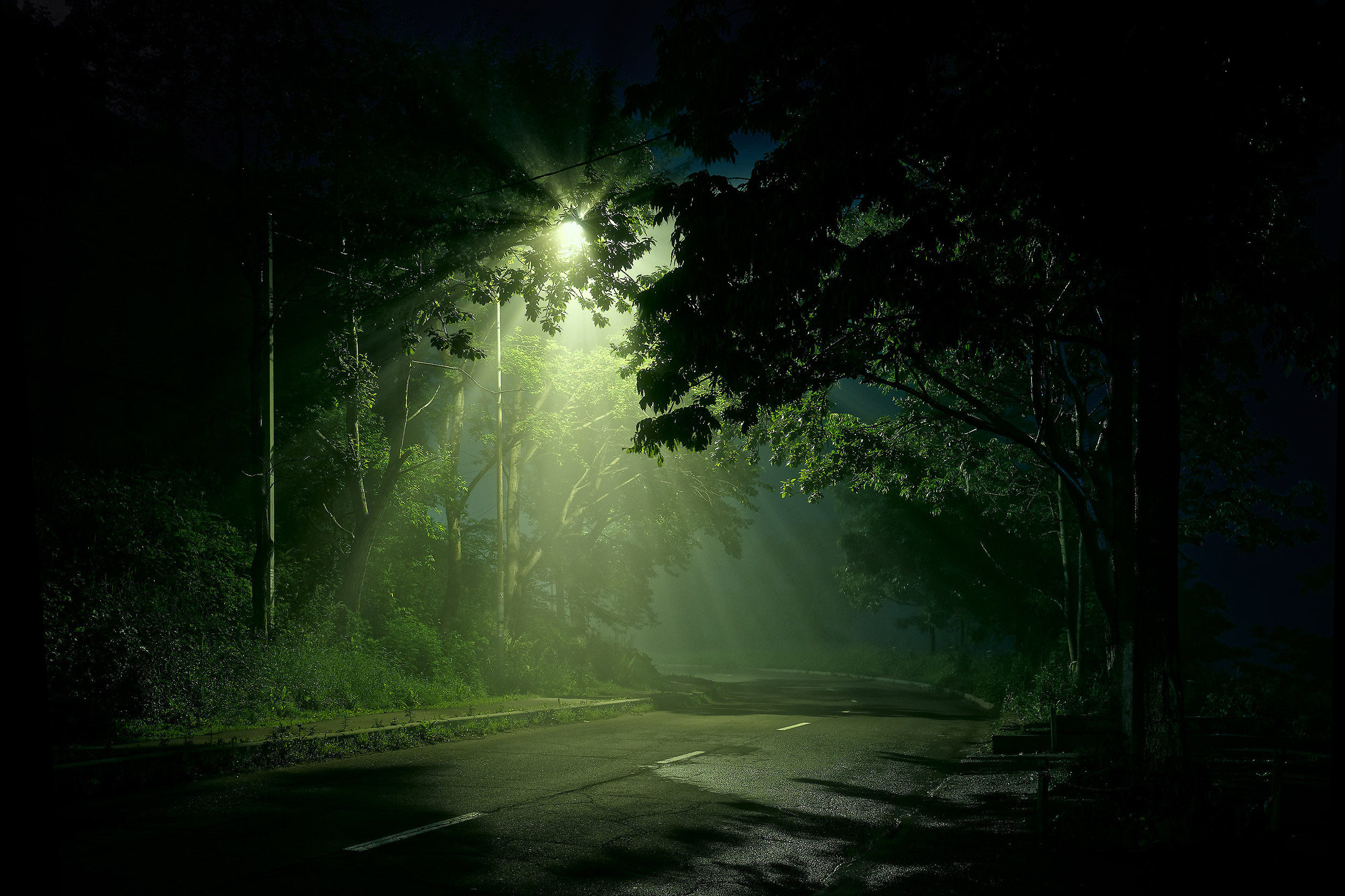 Street Light Shining On Dark Forest Road HD Wallpaper