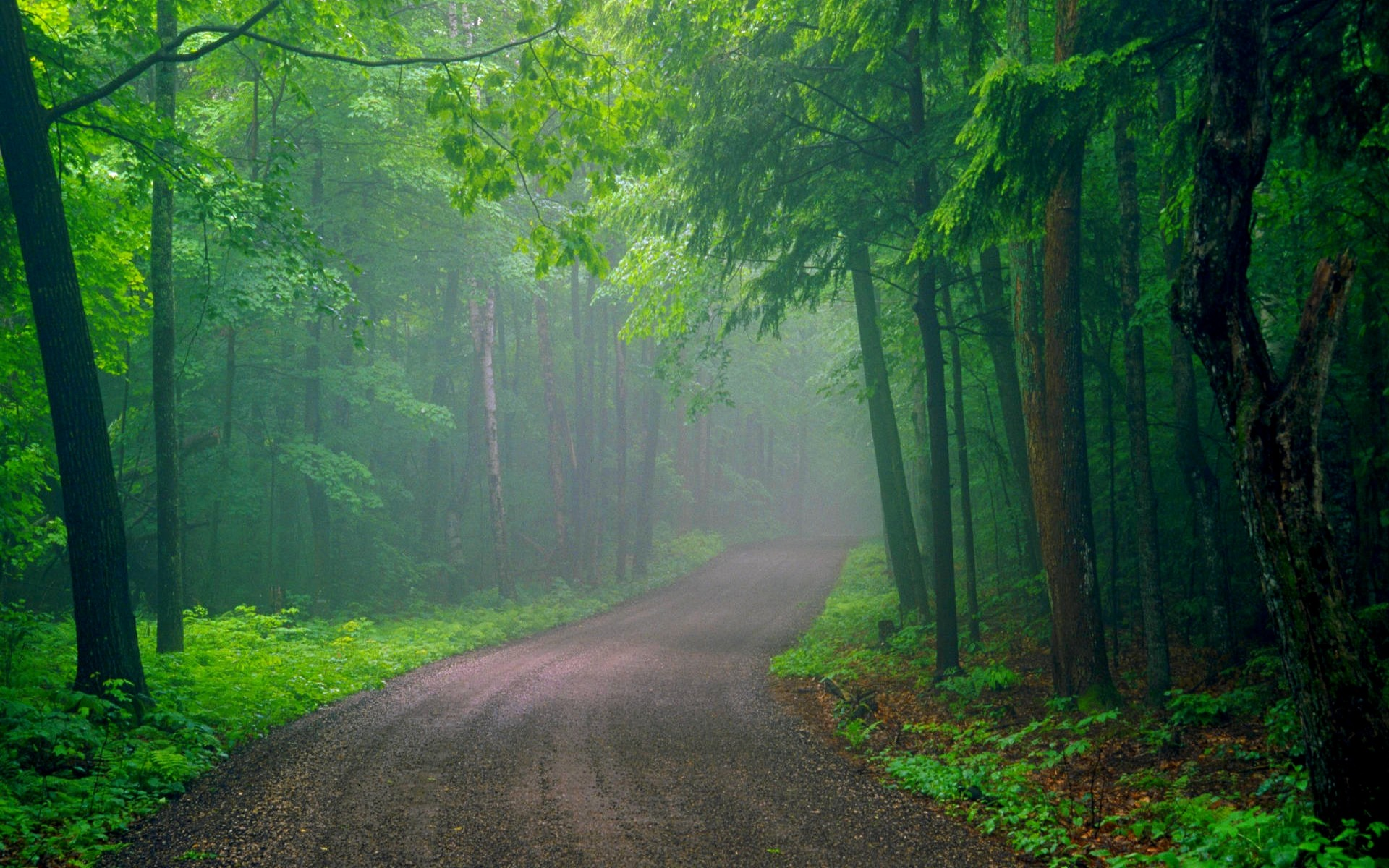 Обои misty, forest, Road. Природа foto 15