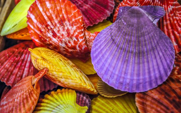Earth Shell Colors Colorful HD Wallpaper | Background Image