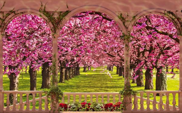 Earth Spring Tree Blossom Gazebo Pink Flower HD Wallpaper | Background Image