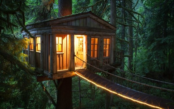 Man Made Cabin House Treehouse Tree Forest HD Wallpaper | Background Image
