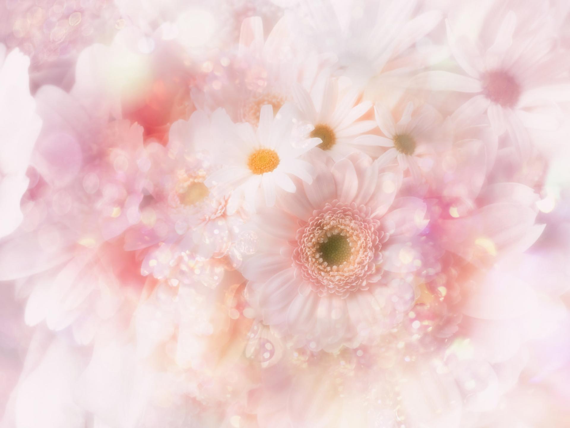 Soft Pink Floral Art Hd Wallpaper Background Image 1920x1440