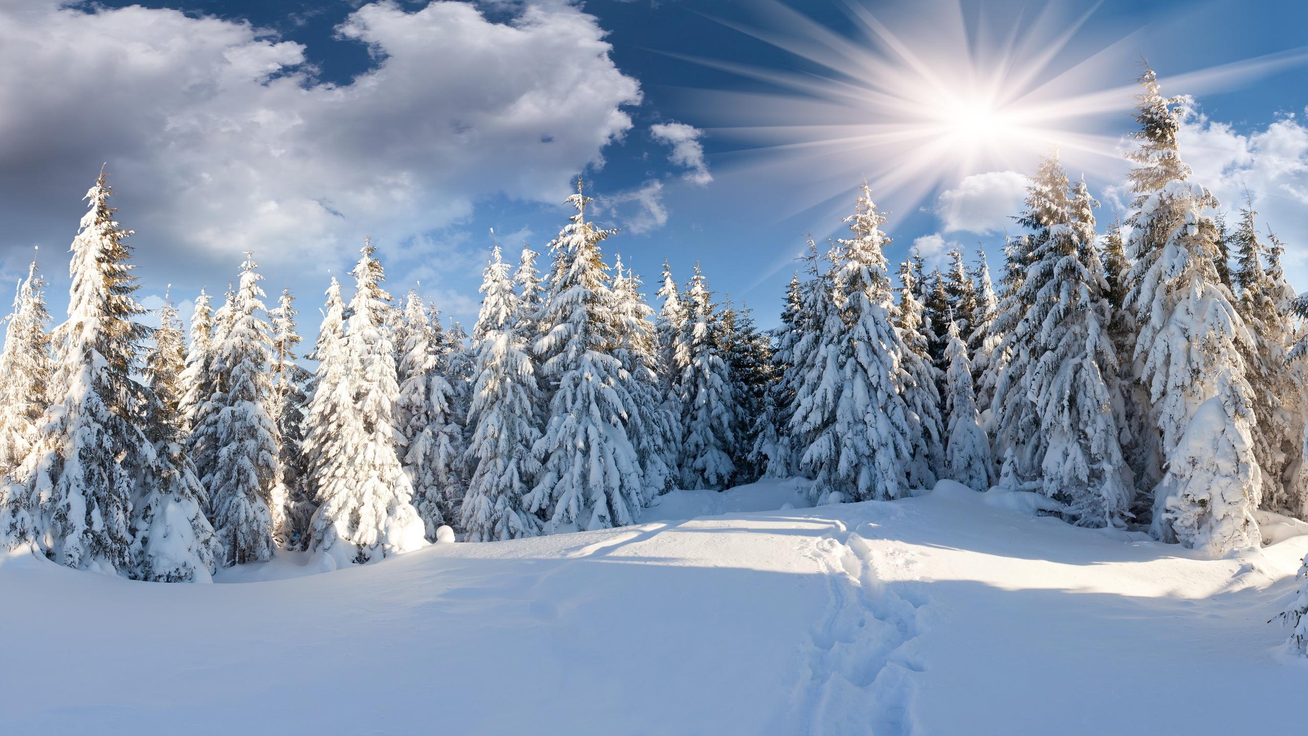 winter forest computer wallpapers desktop backgrounds