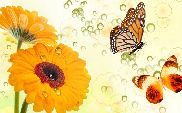 Artistique Papillon Insecte Fleur Yellow Flower Gerbera Fond d'écran HD | Image