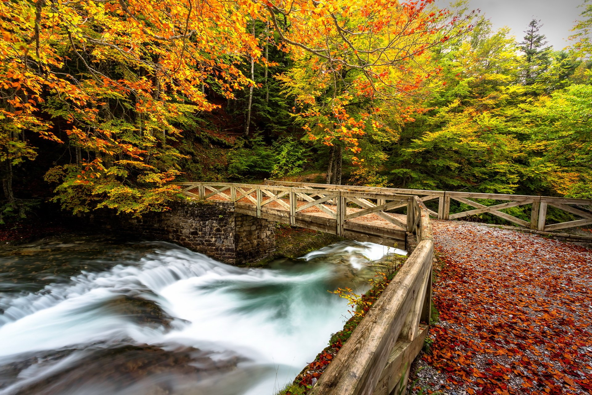 Man Made - Bridge  Park Fall Tree Foliage River Wallpaper