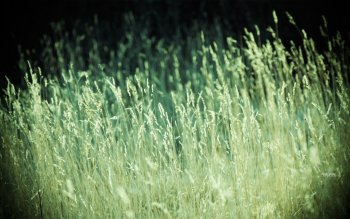 Earth - Grass Wallpapers and Backgrounds ID : 76750