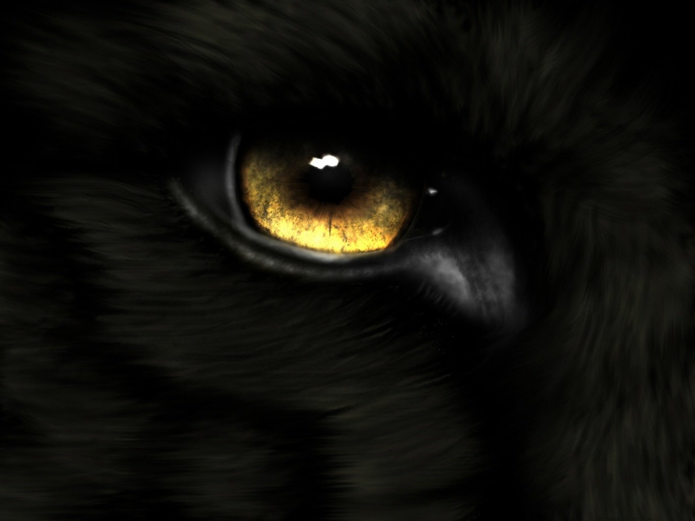 Animal - Eye  Gold Wolf Wallpaper