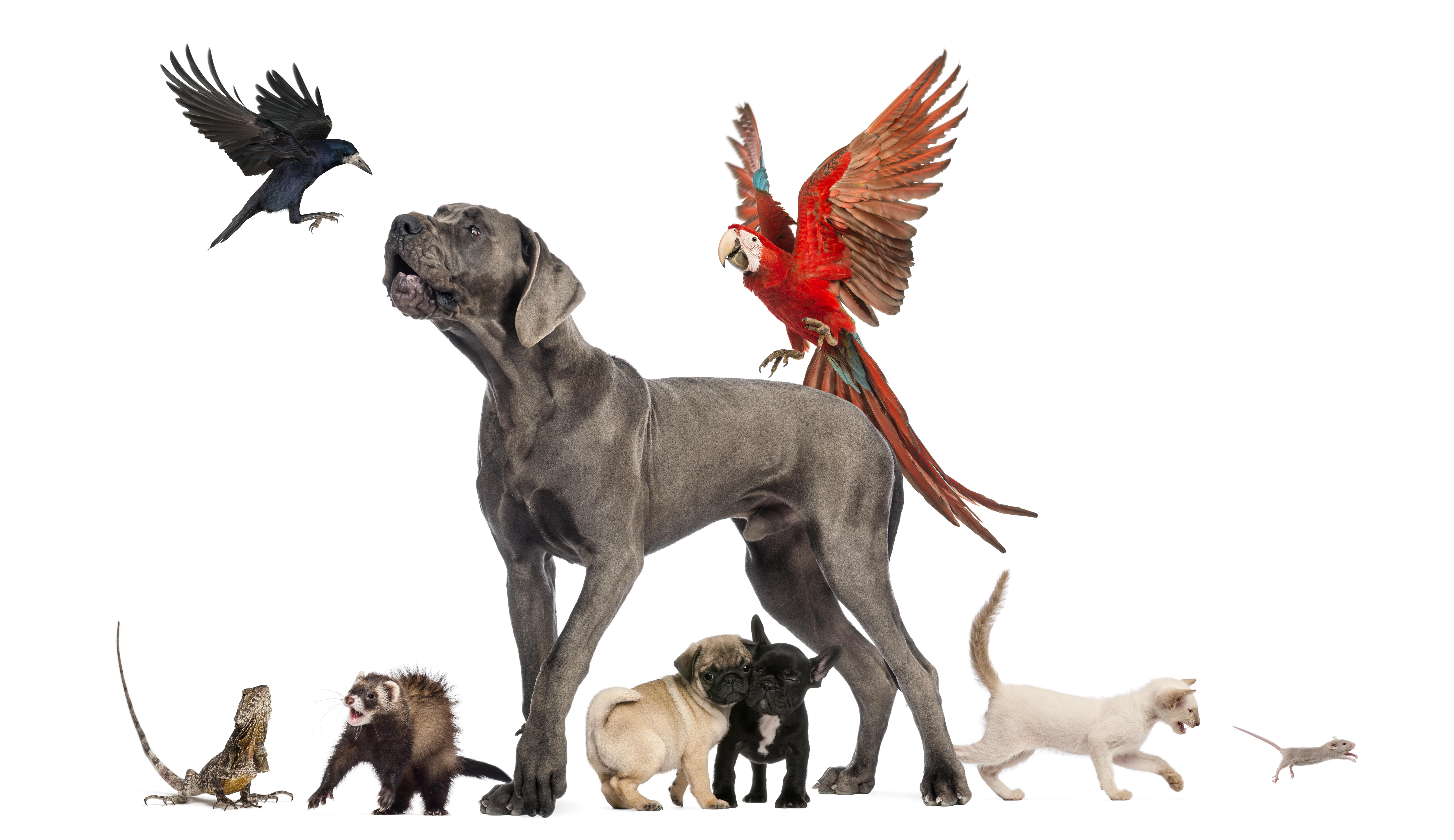 8k Animal Wallpaper Download: Pets 8k Ultra HD Wallpaper