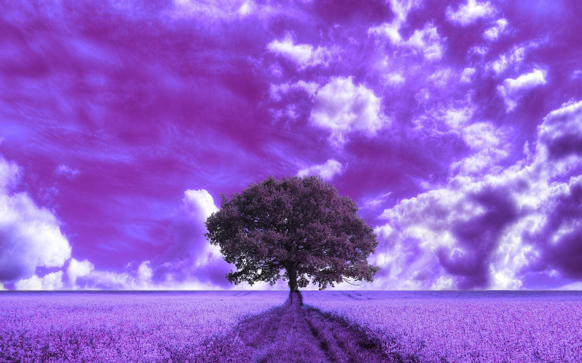 purple clouds and field hd wallpaper  background image