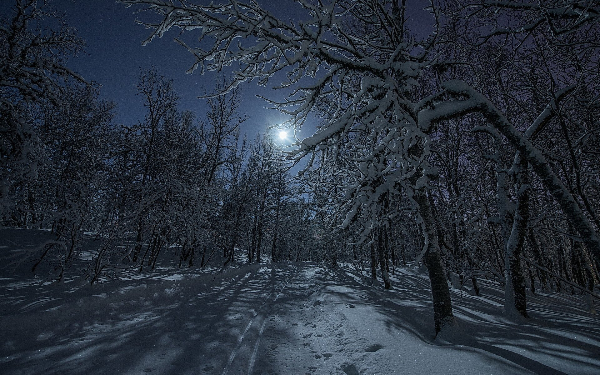 Night In Winter Forest Hd Wallpaper Background Image 1920x1200