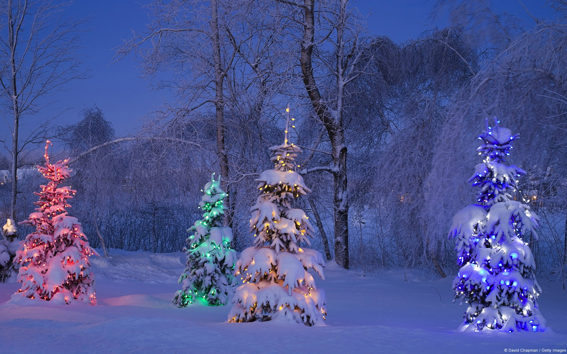 Lighted Christmas Trees In Winter Forest HD Wallpaper