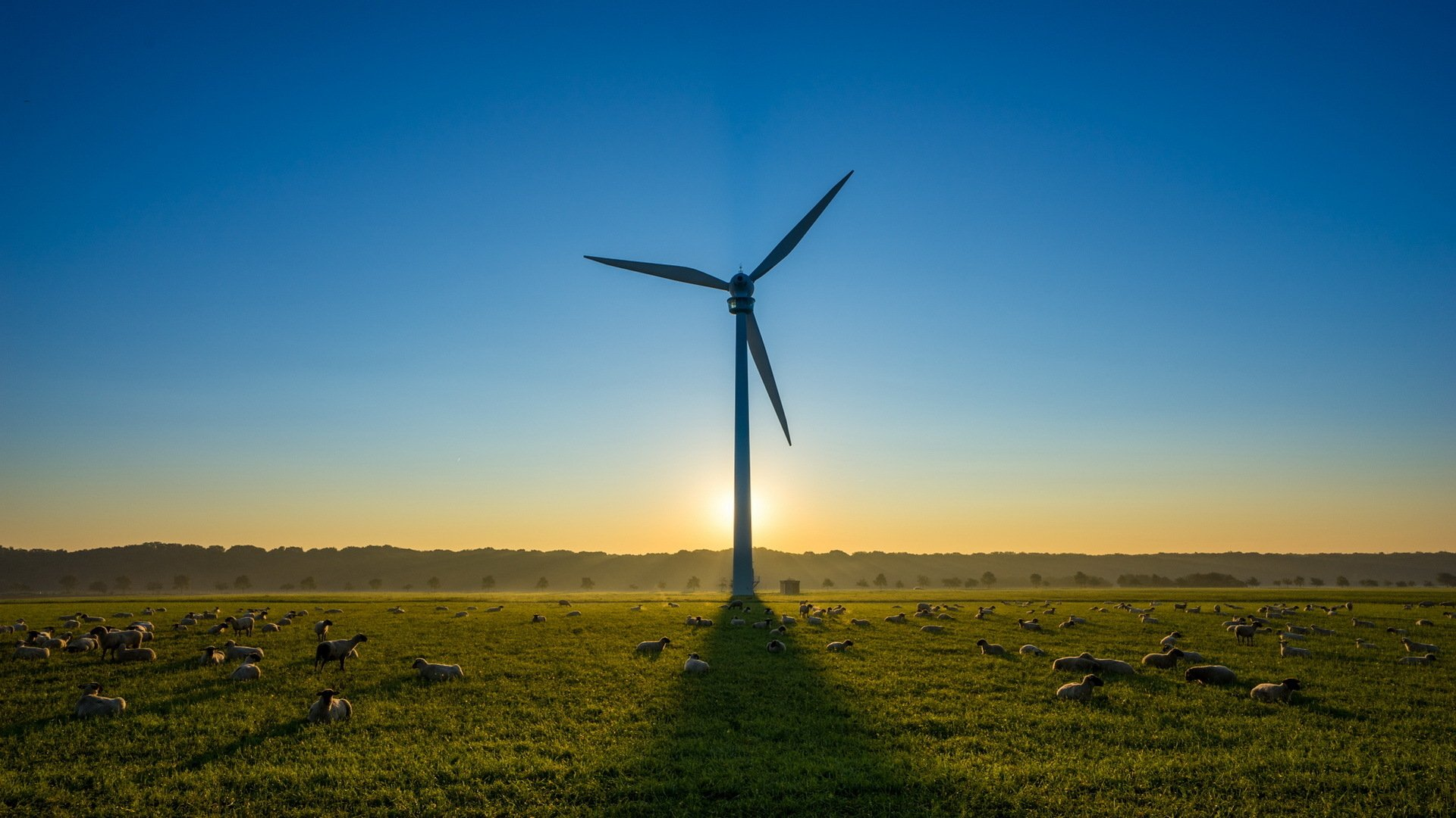 Man Made - Wind Turbine  Sunrise Field Sheep Grass Wallpaper
