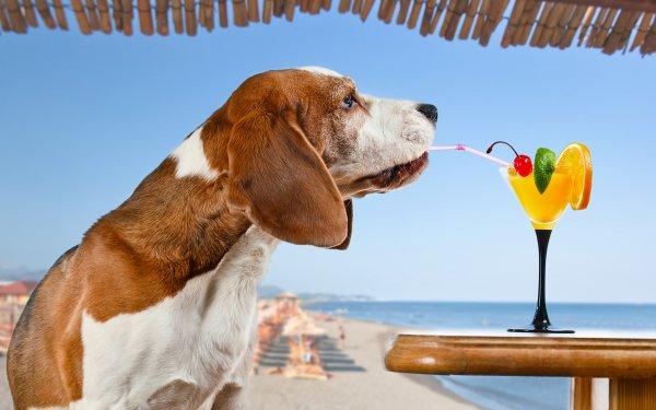 Animal Basset Hound Dogs Dog Summer Cocktail HD Wallpaper | Background Image