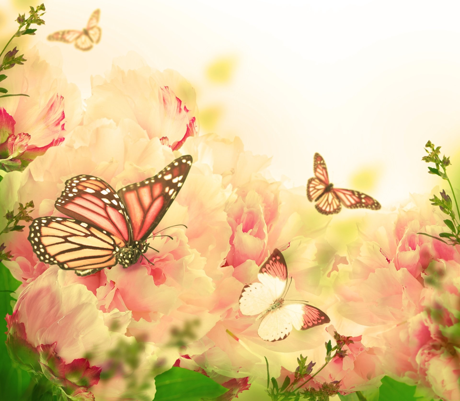Wallpapers ID:777694