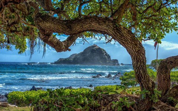 Earth Coastline Hawaii Tree Ocean Sea HD Wallpaper   Background Image