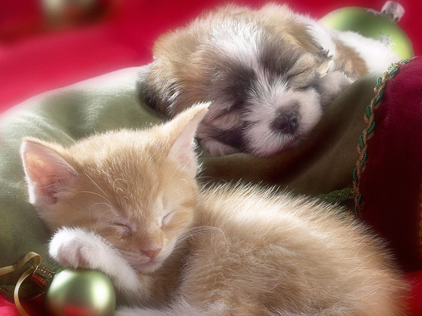 Christmas Puppy And Kitten Sleeping Wallpaper And Background Image