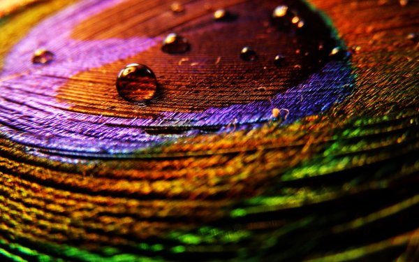 Photography Feather Water Drop HD Wallpaper | Background Image