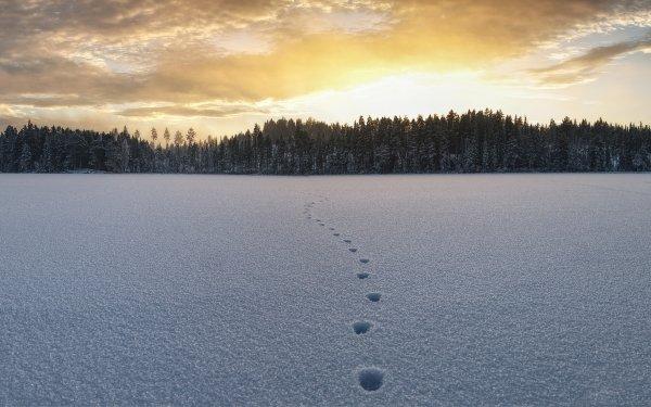 Earth Winter Nature Snow Landscape Tracks HD Wallpaper   Background Image