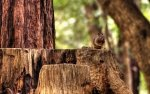 Squirrel HD Wallpapers | Background Images