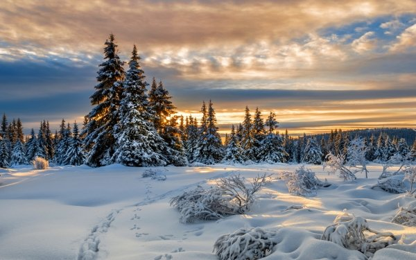 Earth Winter Tracks Nature Tree Snow Cloud HD Wallpaper   Background Image
