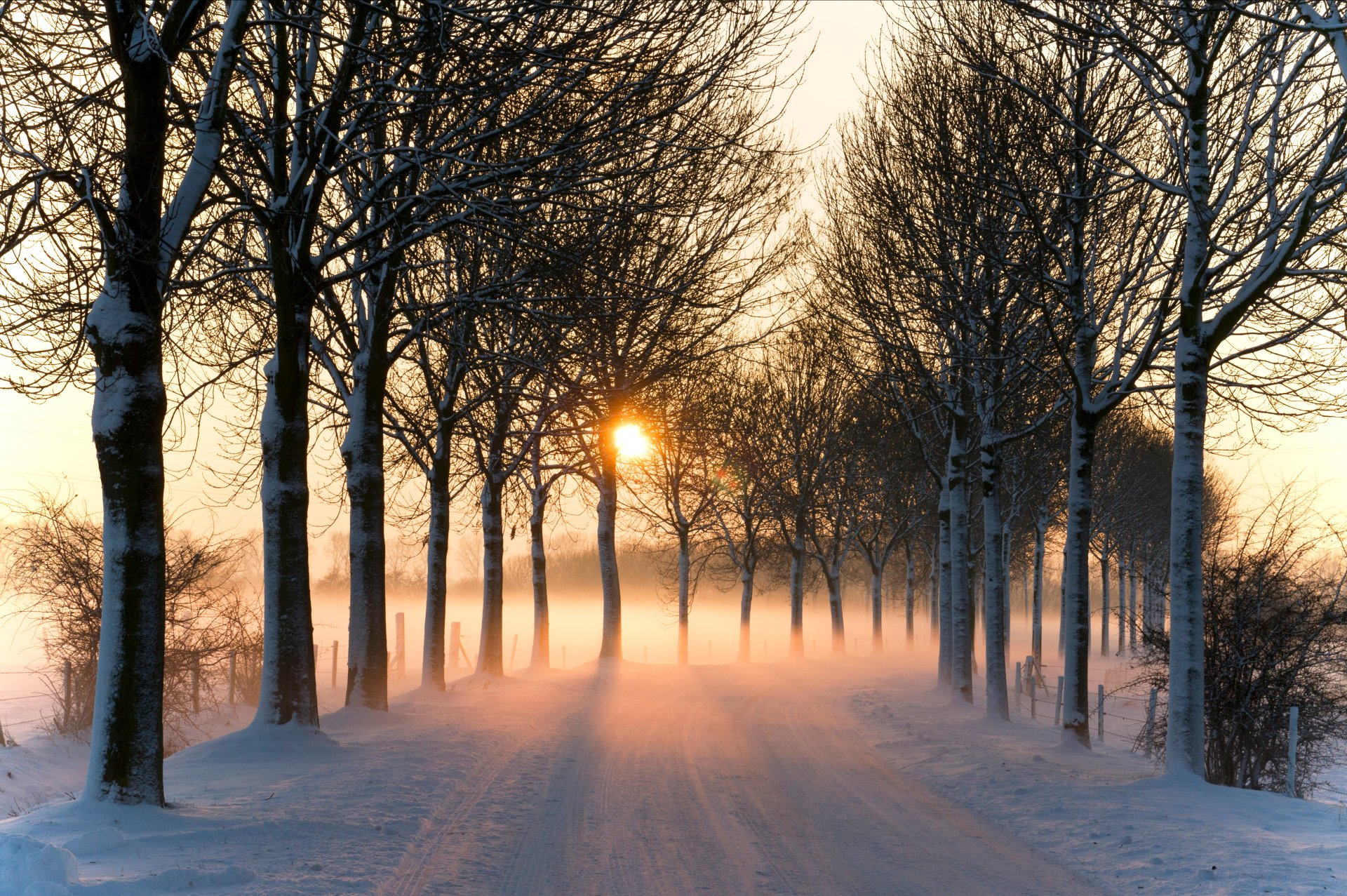 Man Made - Road  Winter Snow Tree Fog Sun Sunset Wallpaper