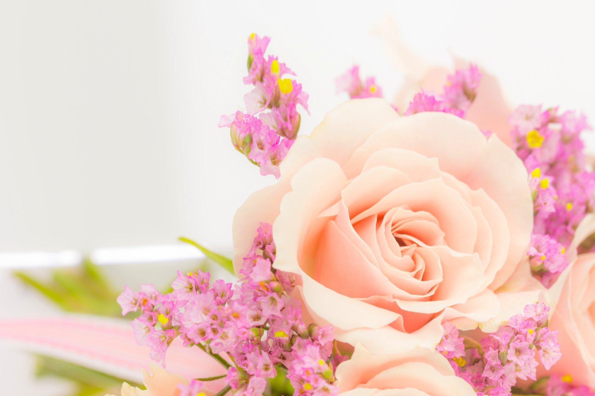 Wall Paper Wide Pink Rose Colours Soft Nature Flower: Soft Pink Rose 5k Retina Ultra HD Wallpaper
