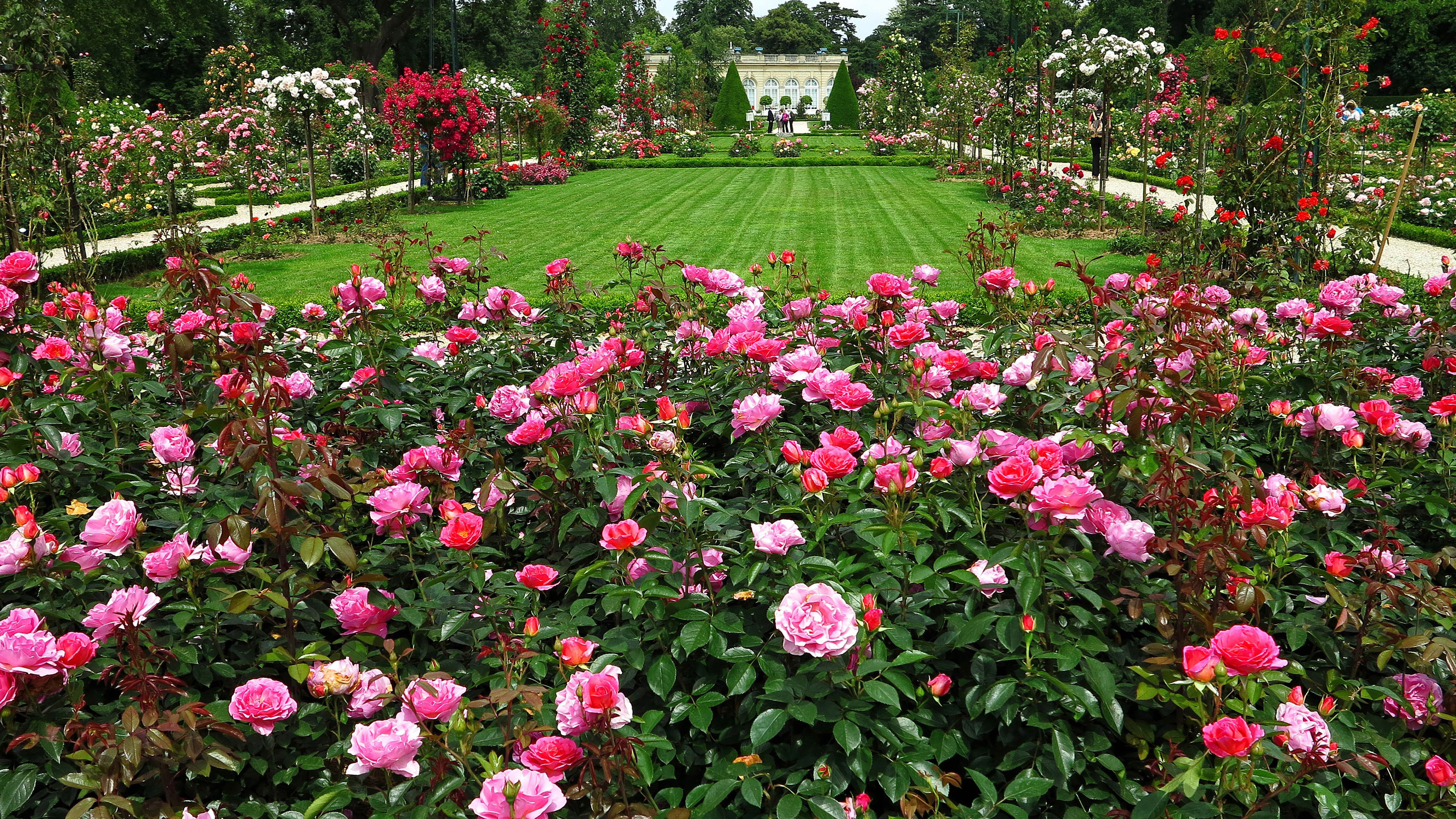 english rose garden hd wallpaper | background image | 3200x1800 | id